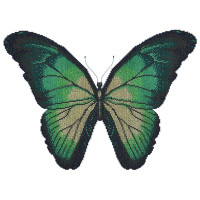 Turquoise Butterfly